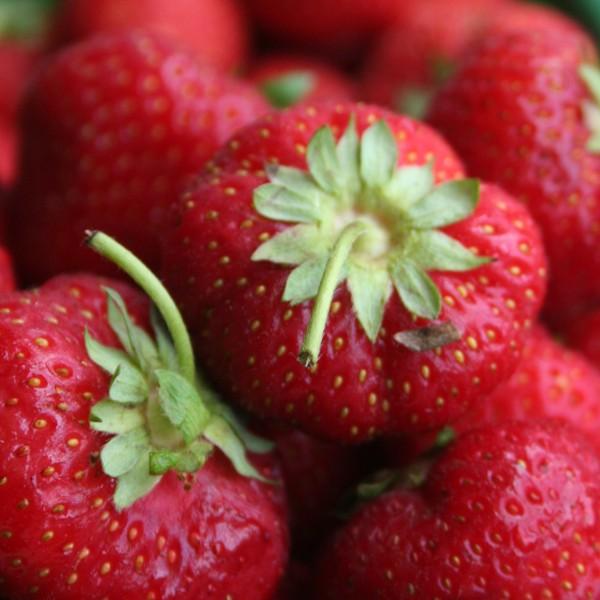 Wissenswertes über die Erdbeere
