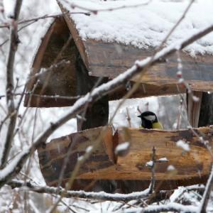 Vogelfütterung im Winter: So machen Sie es richtig!