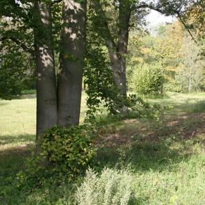 GASTARTIKEL: Naturschutz für den Erhalt des deutschen Waldes