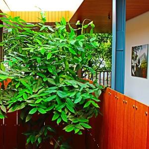 Umzug mit Pflanzen: Die Besonderheiten von Sommer und Winter