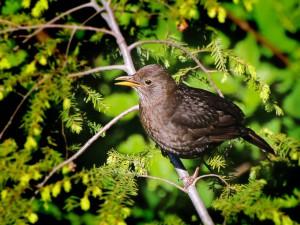Landwirtschaft bringt Vögel um