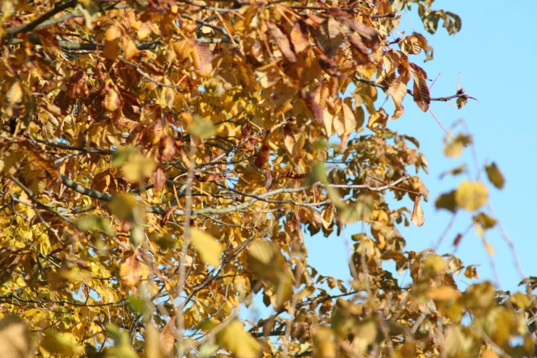 Der Garten im Herbst – So nutzt man die trübe Jahreszeit