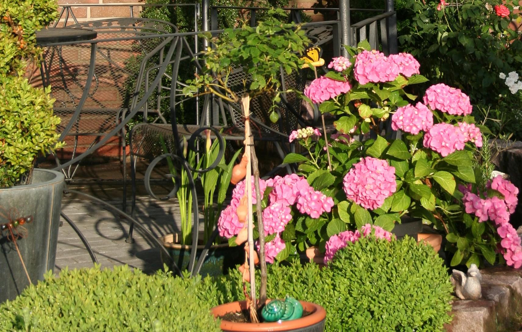 Tipps zum Umtopfen und zur Pflege von Kübelpflanzen