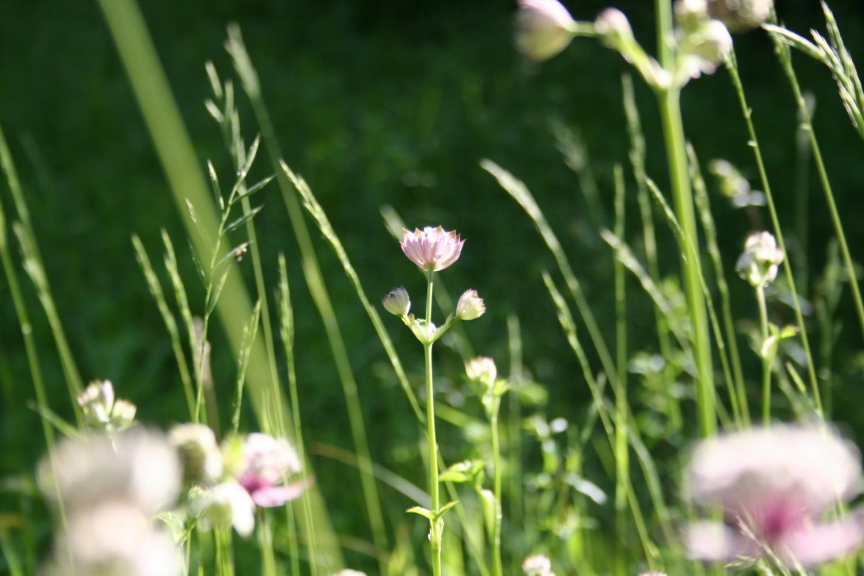 Wildpflanzen gezielt säen - ja oder nein?