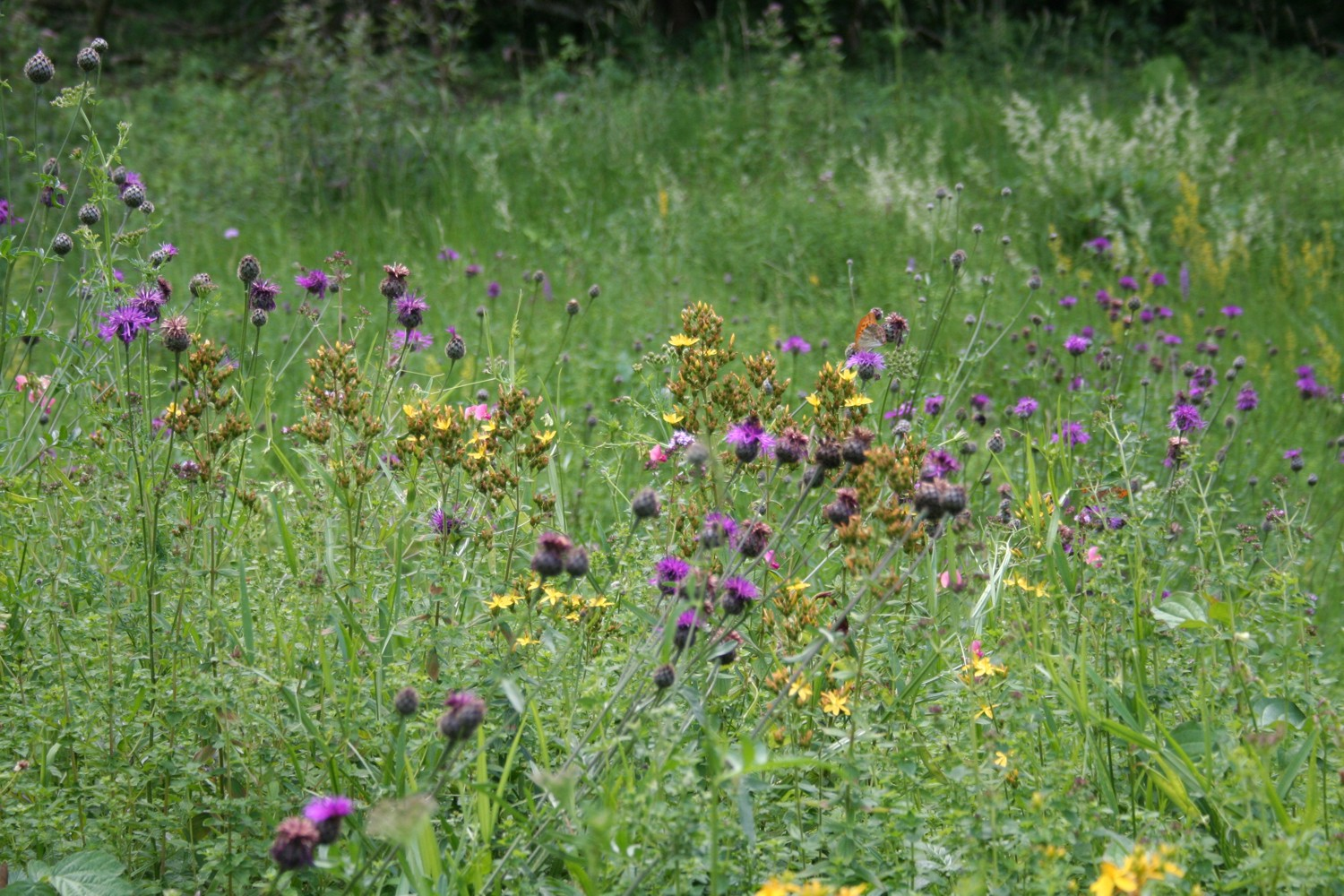 Die Magie der Wildpflanzen
