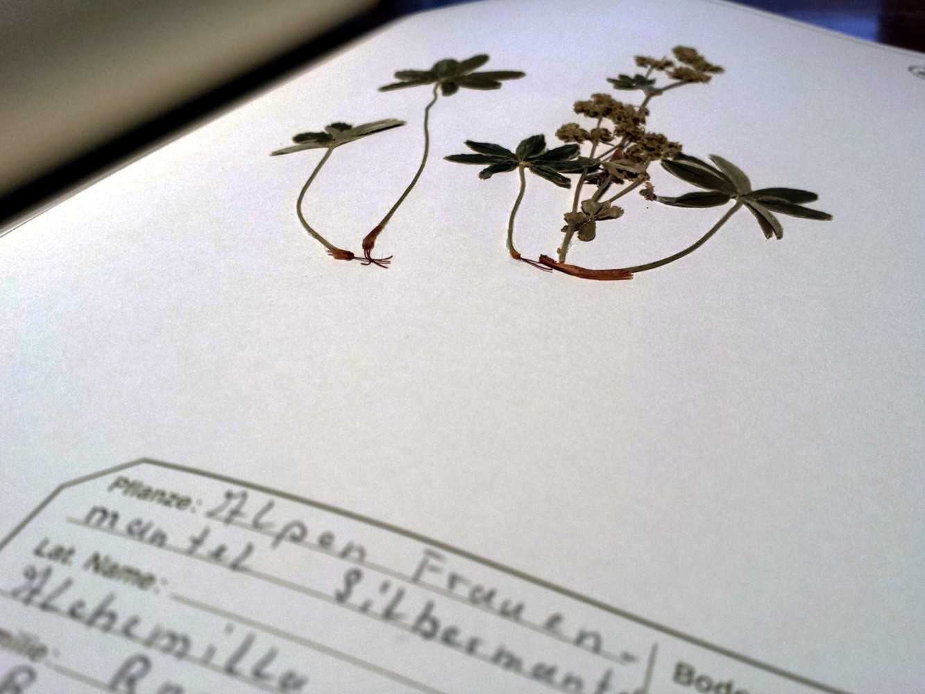 Heimische Wildpflanzen als Allwetter-Hobby
