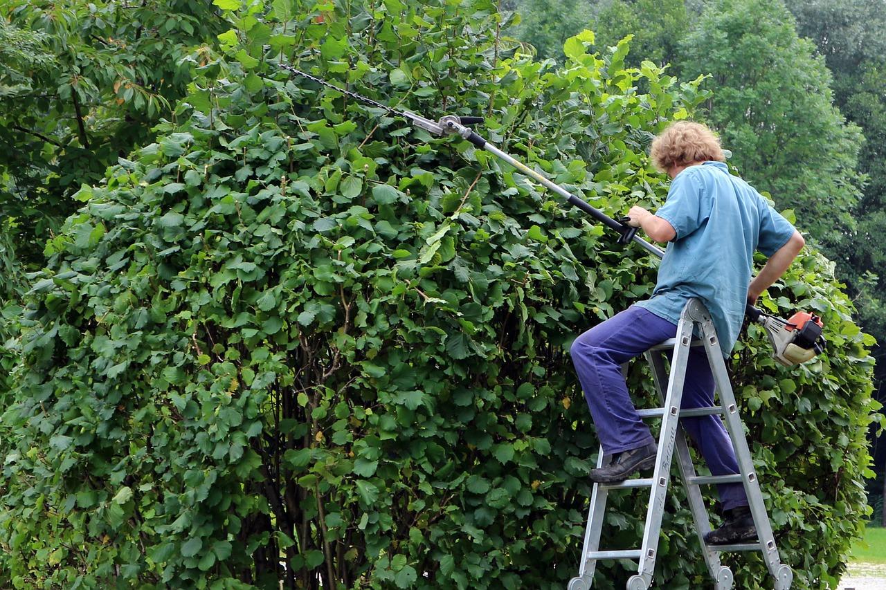 Naturgarten natürlich pflegen: 5 Profi-Tipps zum Heckeschneiden