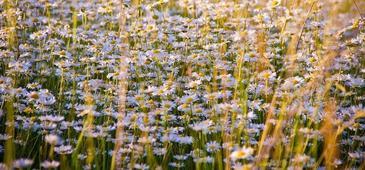 Pflanzen richtig gießen - Als Faustegel für die Gießmenge gilt: je größer die Blätter, desto höher der Wasserbedarf.